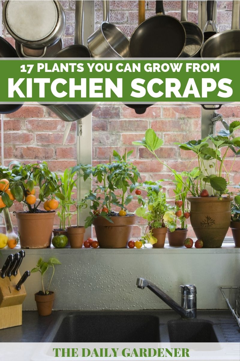 17 Plants You Can Grow from Kitchen Scraps 3