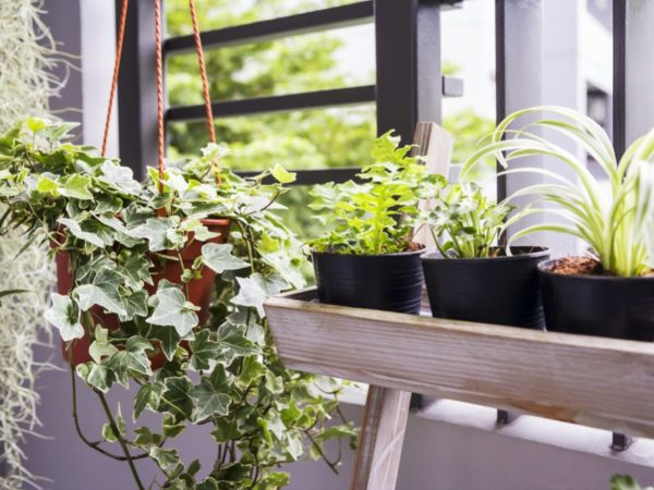 21 Air Purifying Plants for Removing Indoor Toxins
