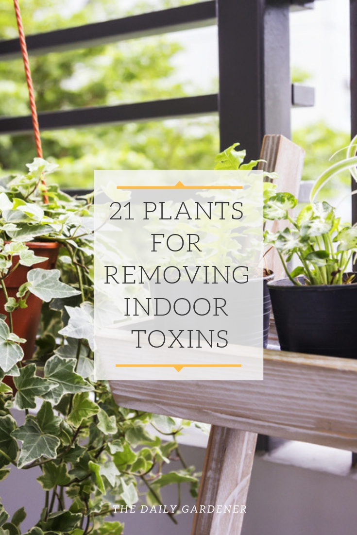Air Purifying Plants pinterest 2