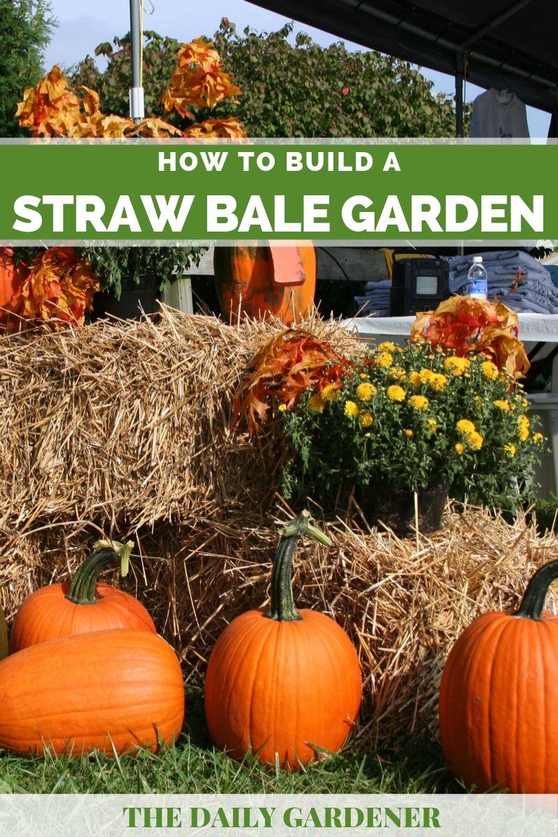 Build Straw Bale Garden 3