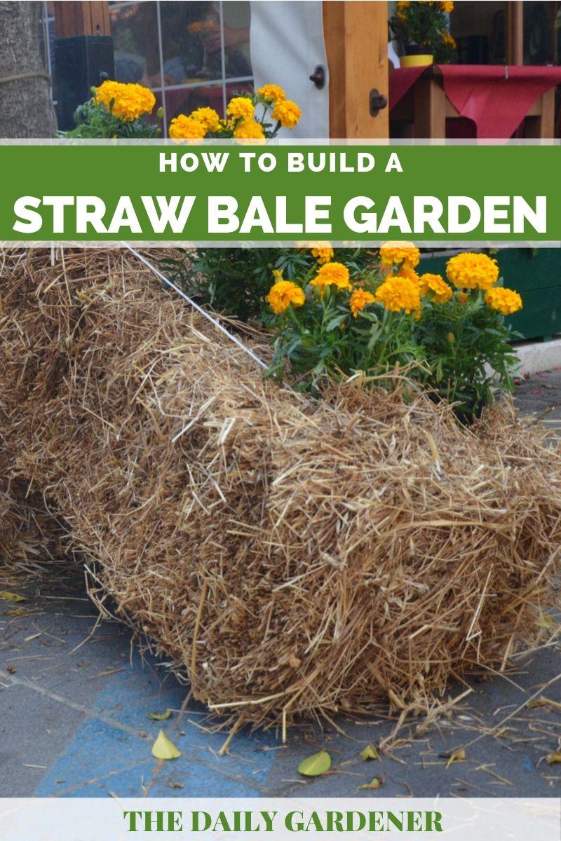 Build Straw Bale Garden 4