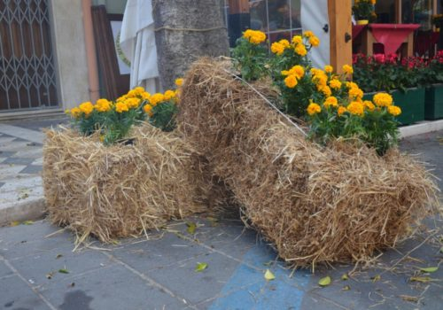 How to Build a Straw Bale Garden? The Unlimited Guide