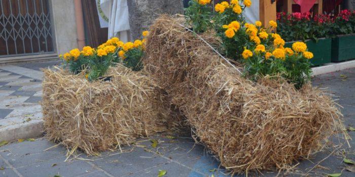 Build a Straw Bale Garden