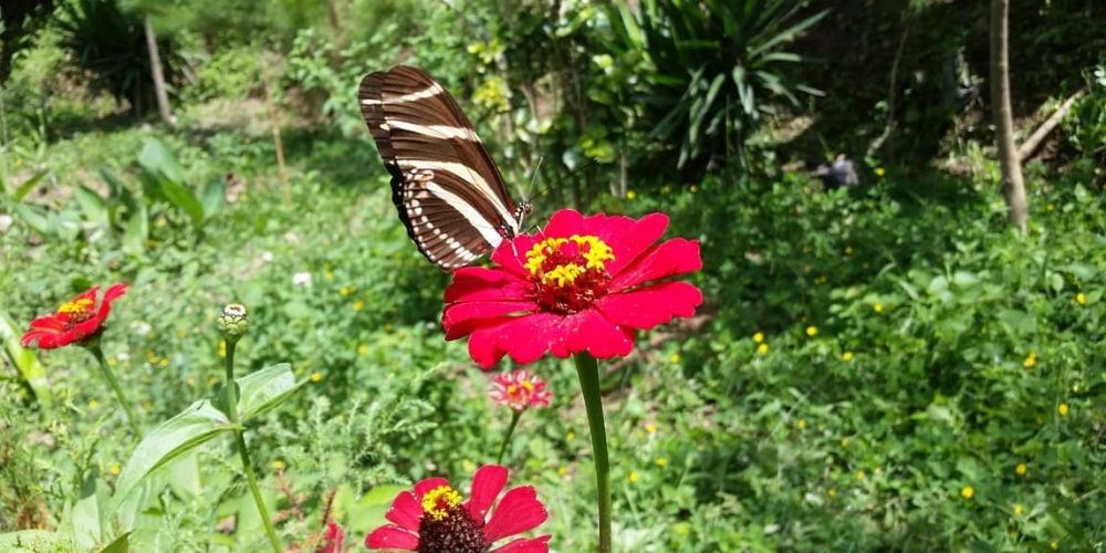 How to Create a Lovely Butterfly Garden? The Unlimited Guide