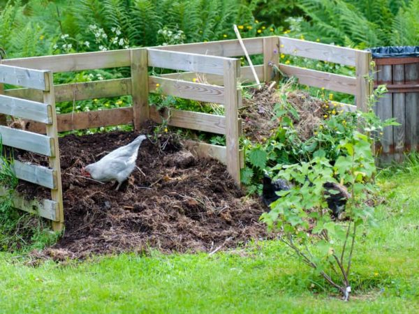 Compost Piles for Beginners: A Fool Proof Guide