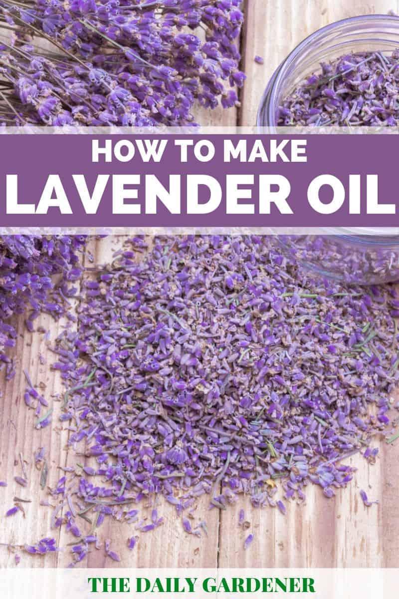 DIY Lavender Oil 2