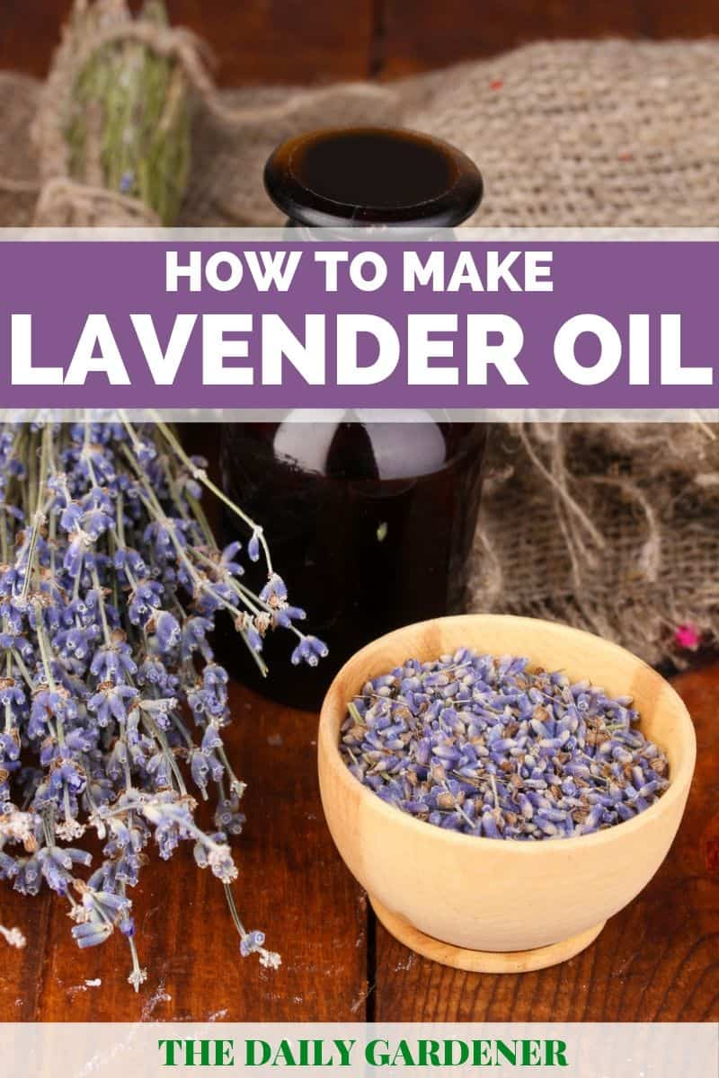 How To Make Lavender Oil 2 Methods The Daily Gardener