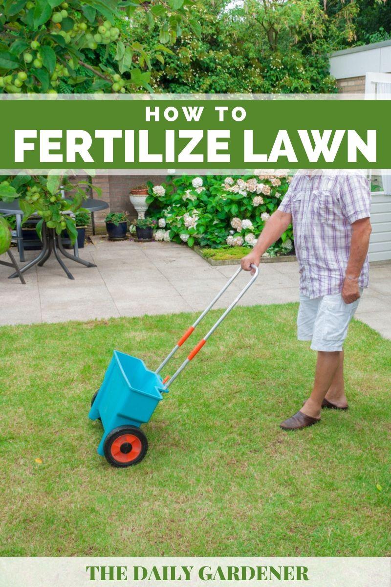 Fertilize Lawn 1