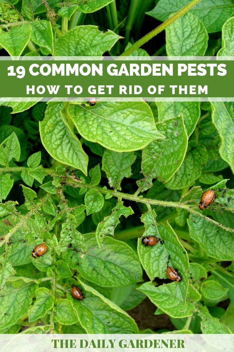Garden Pests 1