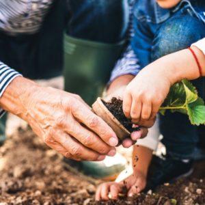 Garden Soil vs Potting Soil