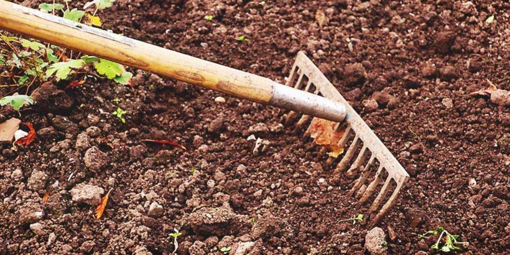 Garden Soil vs Potting Soil – What's the Difference?
