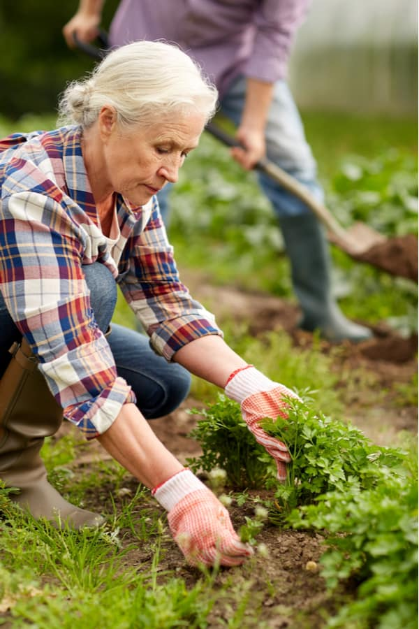 Gardening can improve your heart health