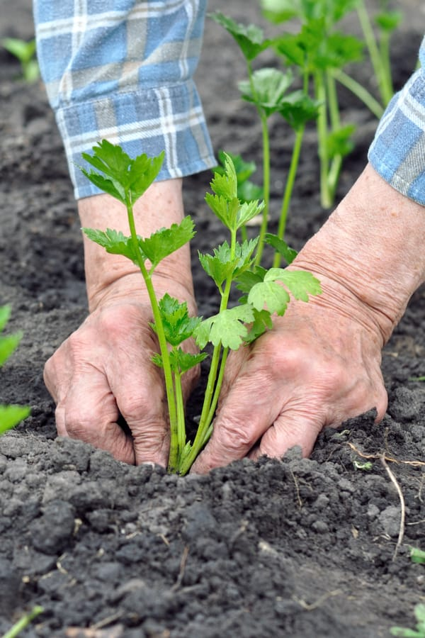 Gardening improves hand strength and agility