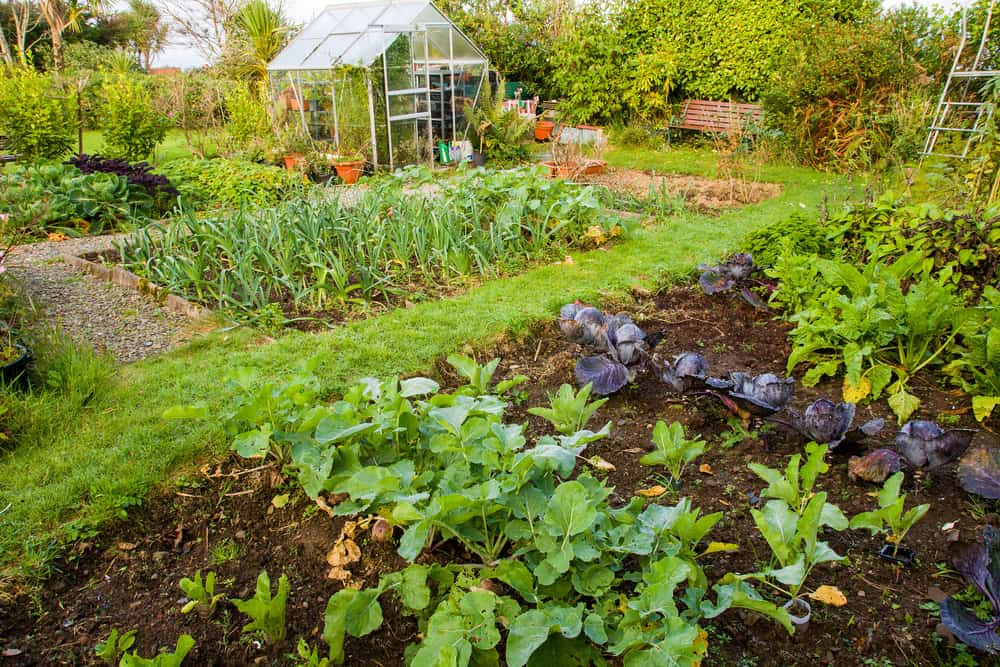 Gardening is a way to do something beneficial for the environment