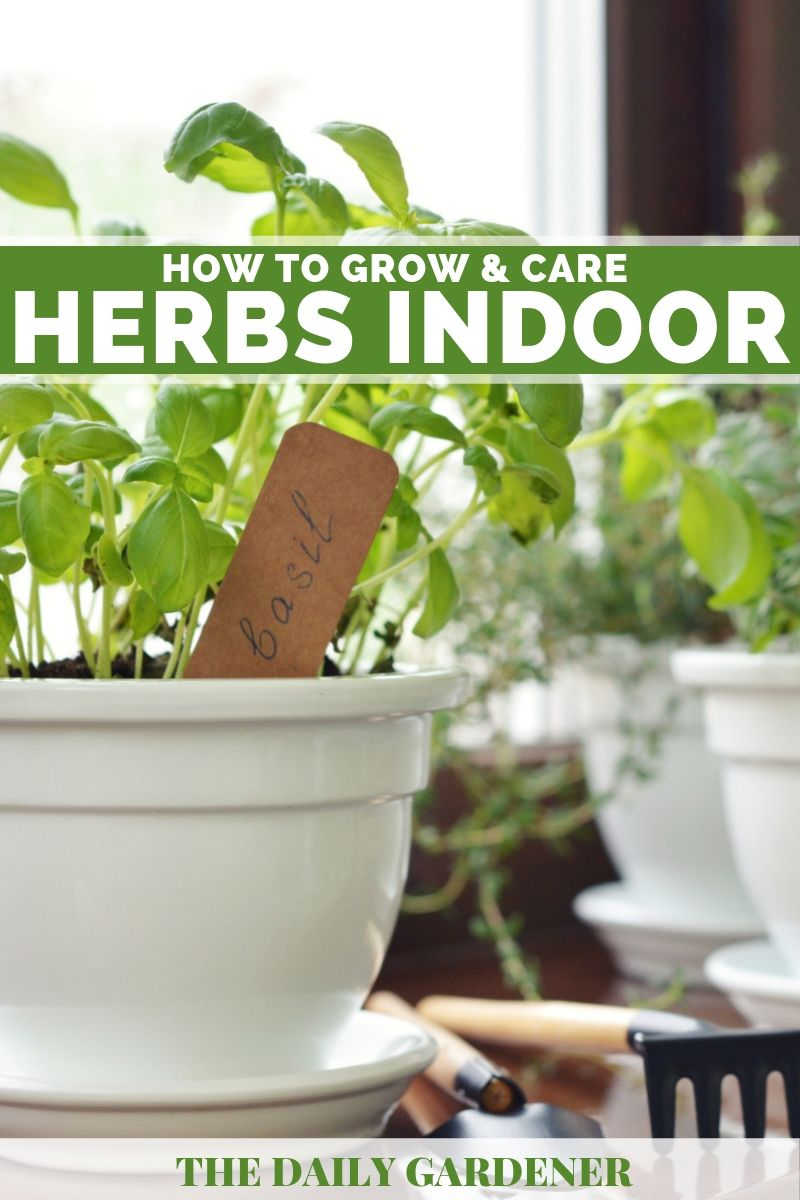 Grow Herbs Windowsill