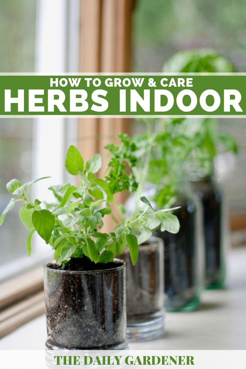 Grow Herbs Windowsill 2