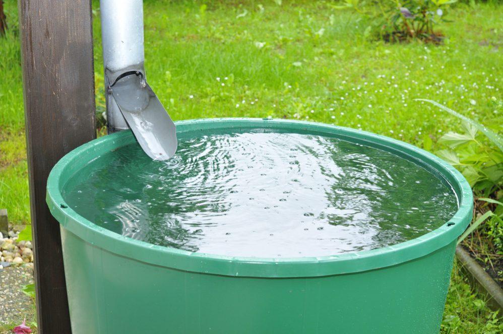 Harvest water