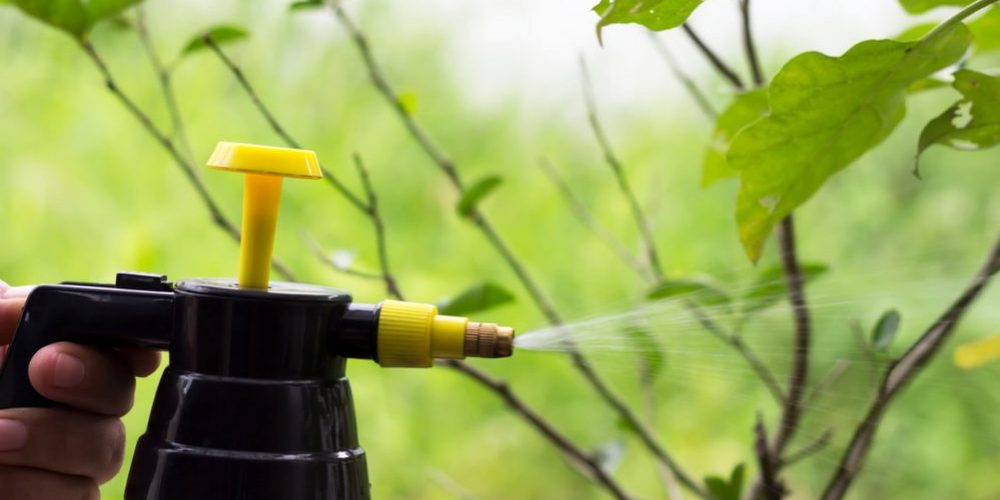 10 Natural Homemade Insecticides That Won't Hurt Your Garden