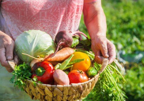 How to Start an Organic Garden?