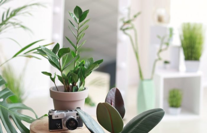 23 Houseplants that are (Nearly) Impossible to Kill