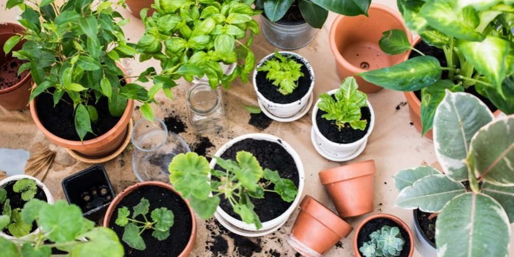 How to build an Indoor Garden? the Unlimited Guide