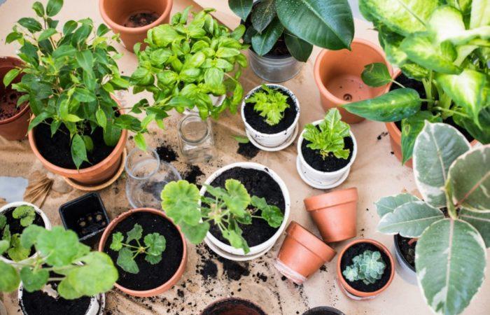 How to build an Indoor Garden?