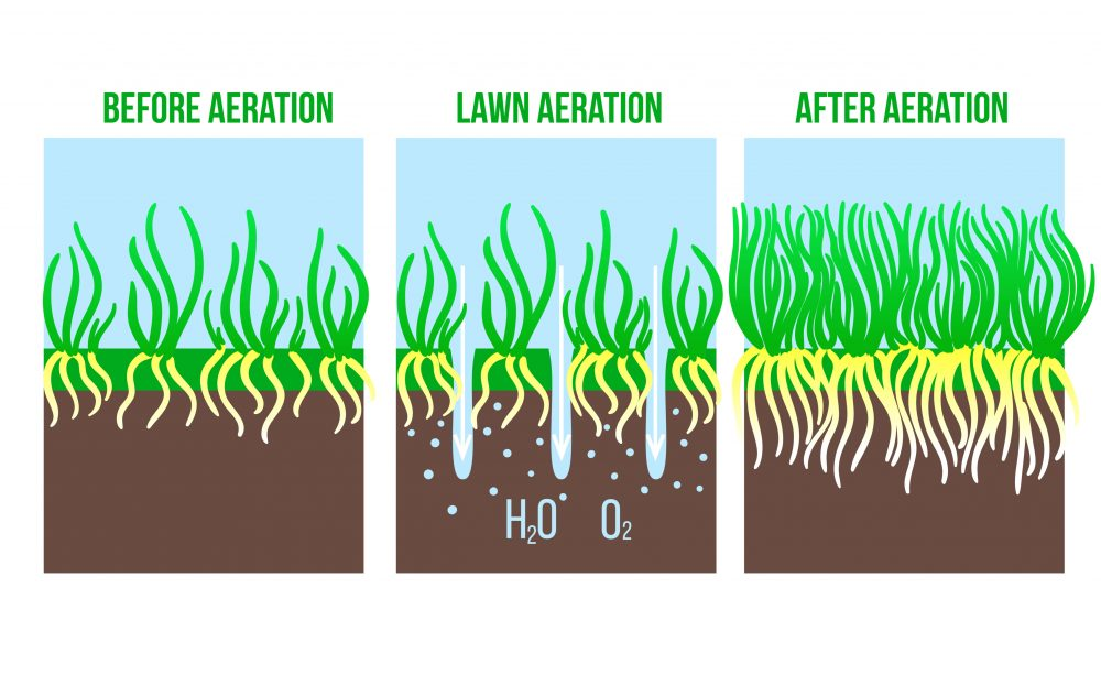 Lawn aeration stage illustration
