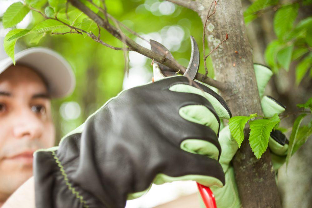 Monitor Your Garden