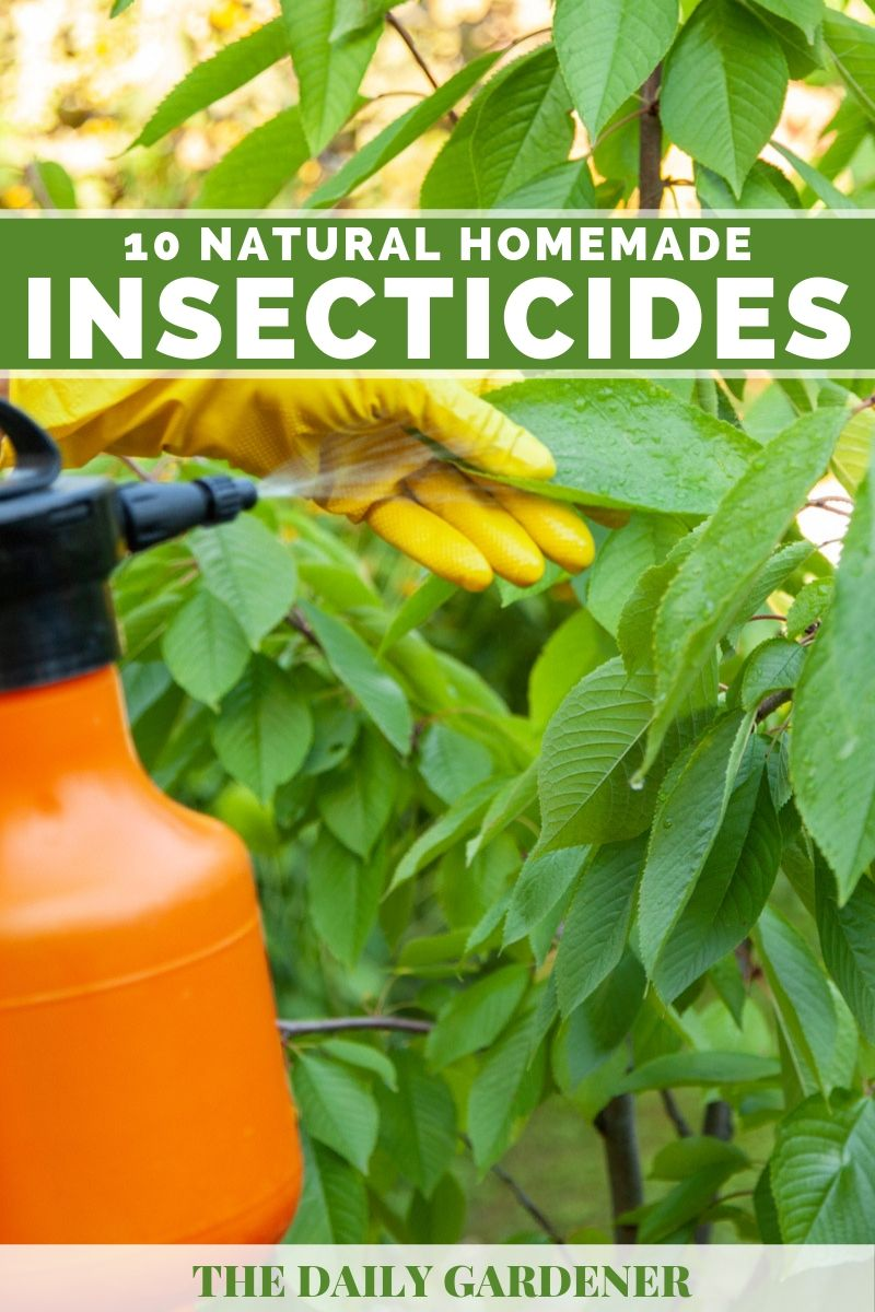 10 Natural Homemade Insecticides That
