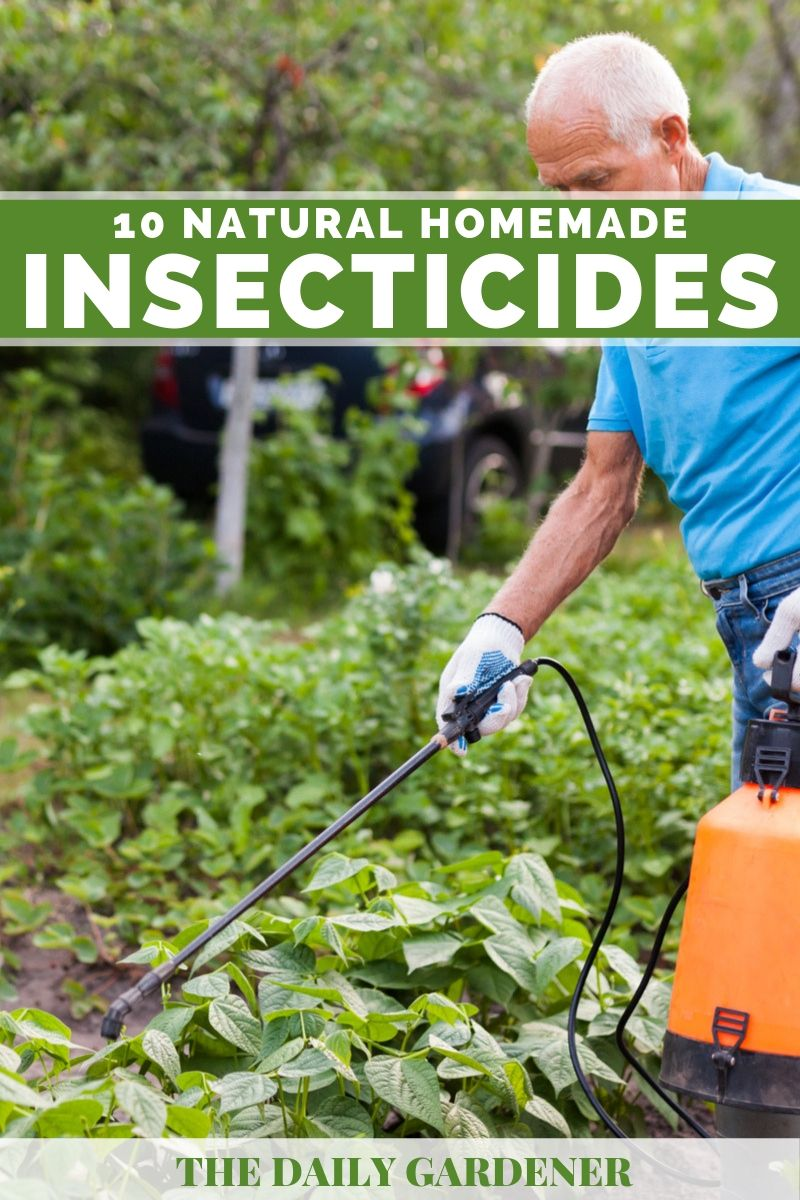 Natural Homemade Insecticides 2