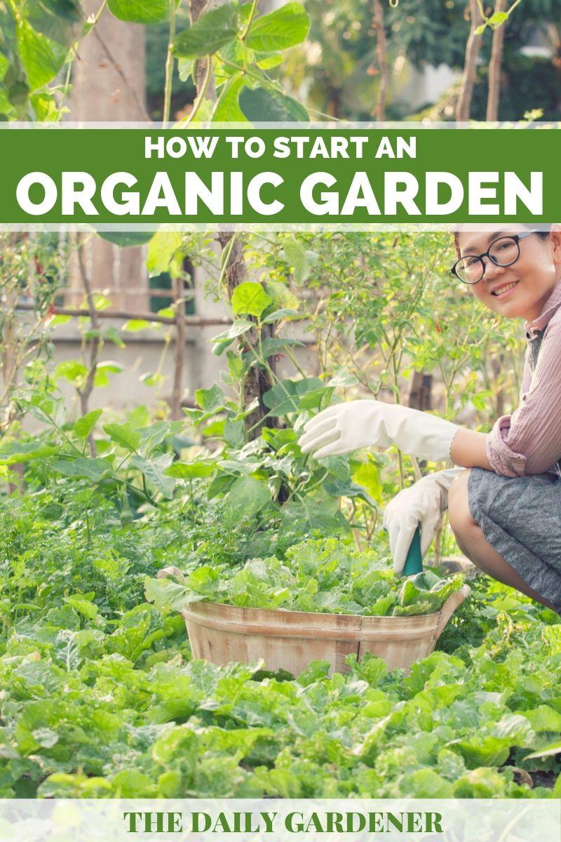Organic Garden 2