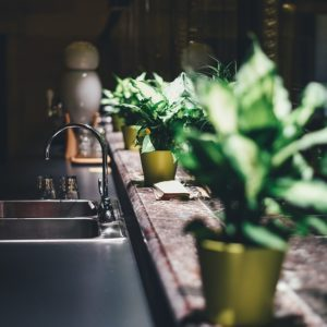Plants Grow from Kitchen Scraps