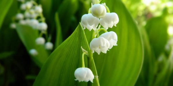 Top 10 Deadly Poisonous Plants You Should Avoid in Garden