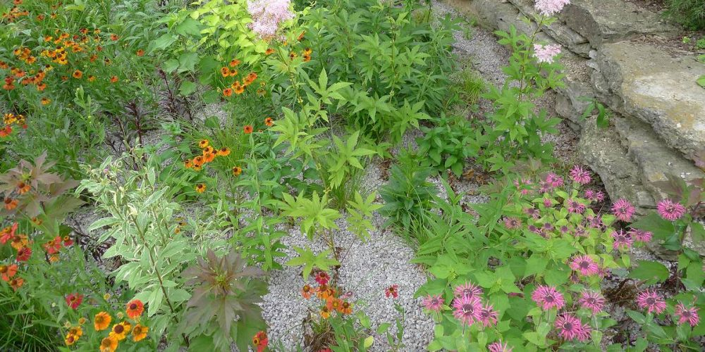 How to Build Your Own Rain Garden to Filter Runoff?
