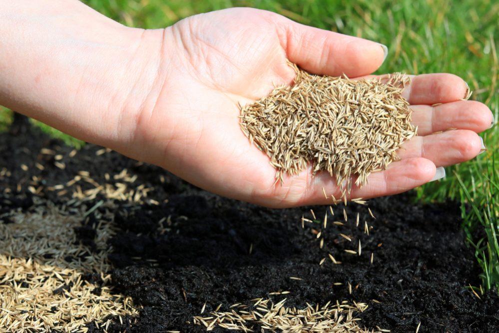 Seeding lawn