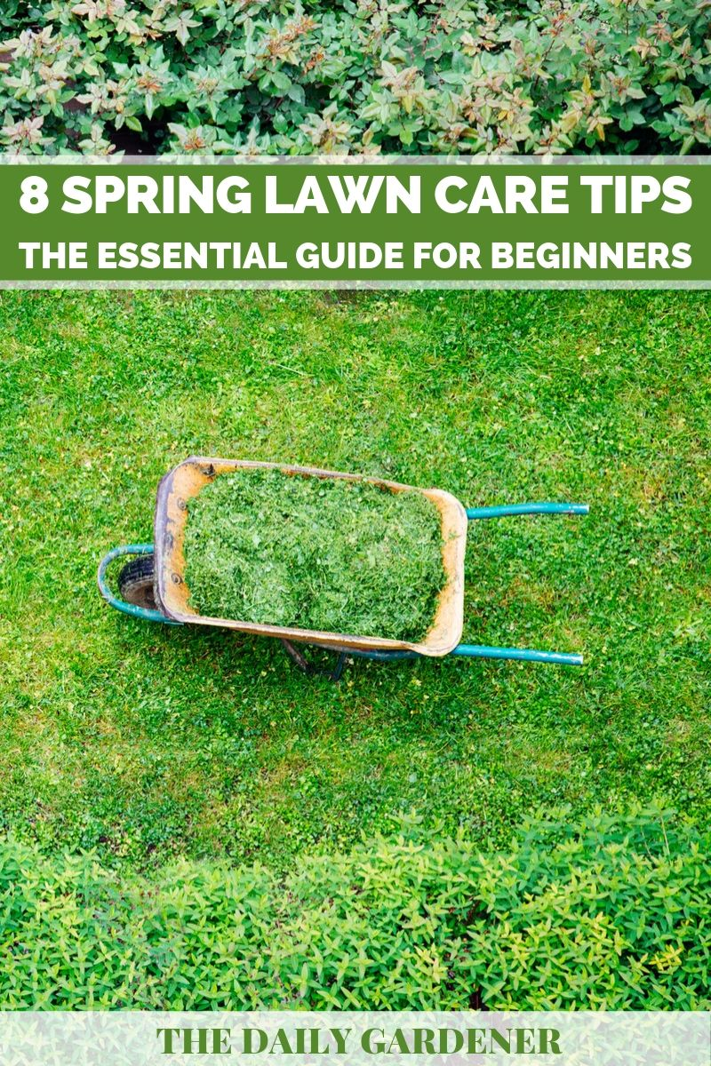 8 Spring Lawn Care Tips The Essential Guide For Beginners