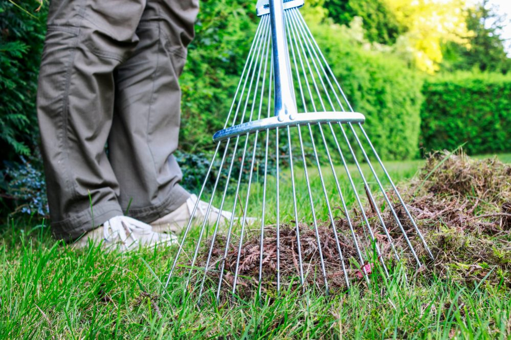Spring Lawn Care raking