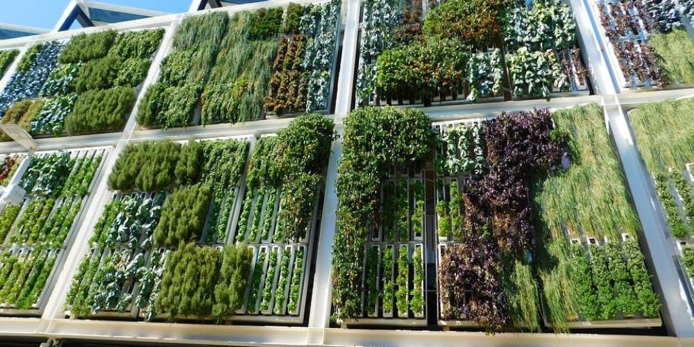 How to Construct the Perfect Vertical Garden? Step by Step Guide