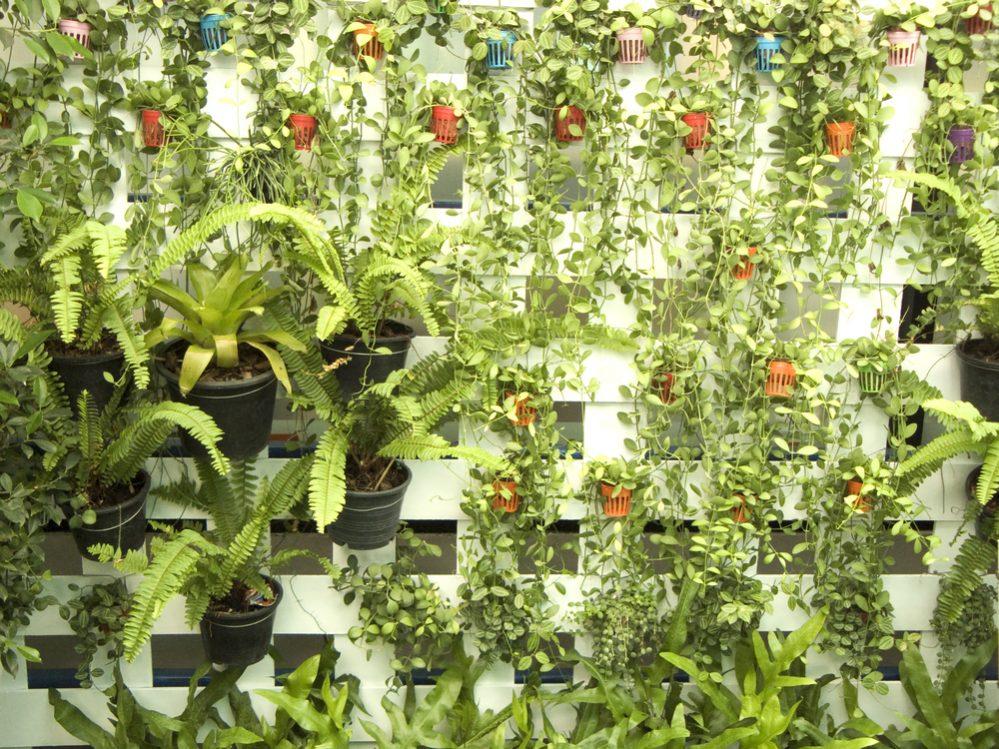 Wall trellis garden