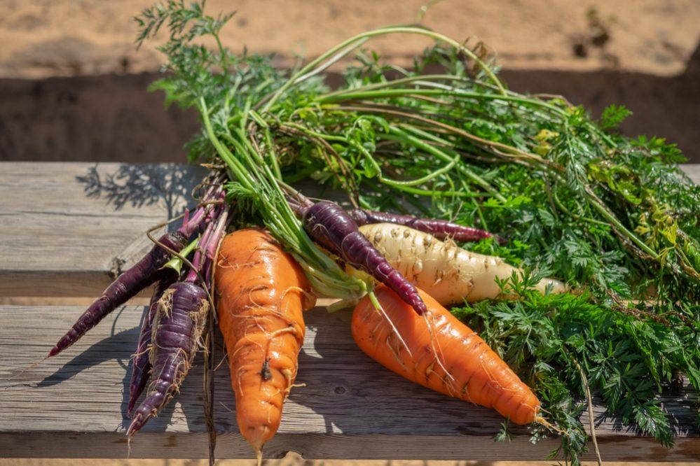 What is Organic Gardening