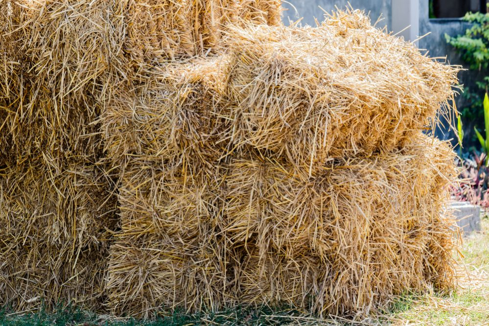 Where to Buy Straw Bales
