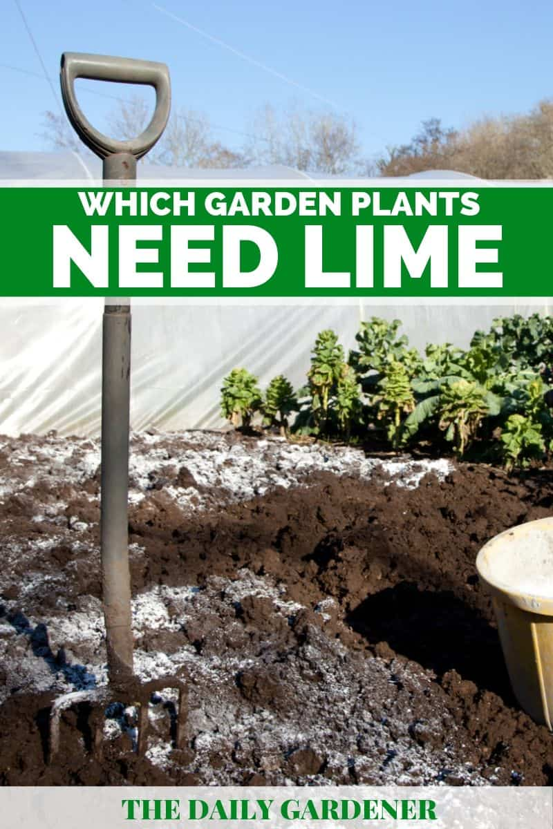 Which Garden Plants Need Lime 1