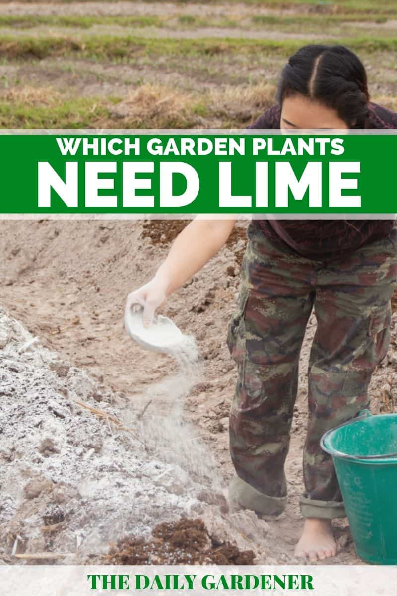 Which Garden Plants Need Lime 2