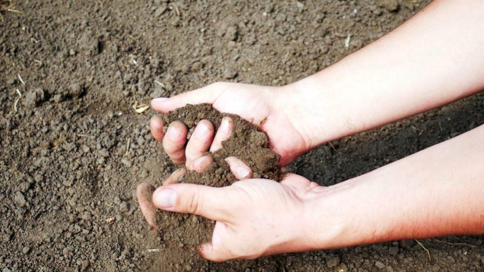 check soil