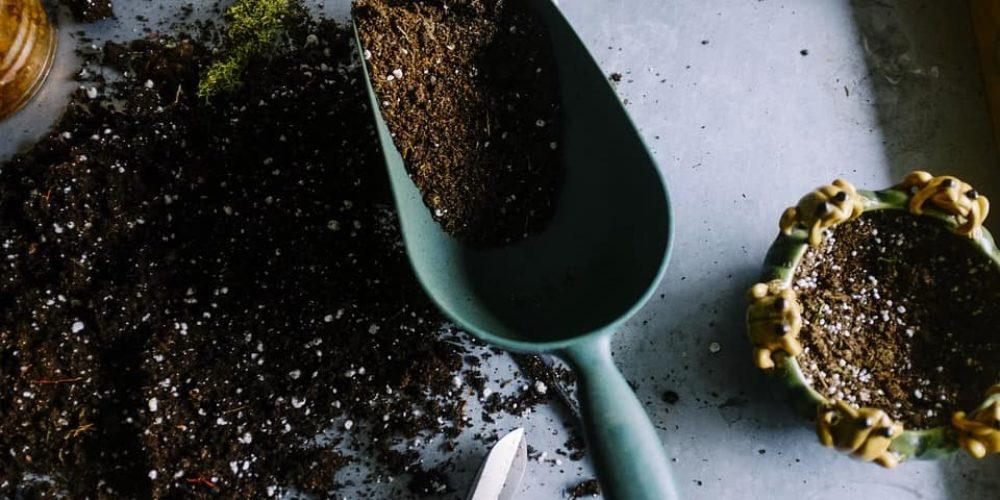 How Gardening Help You Work Creativity?
