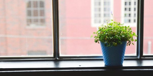 Can Plants Purify Air? 21 Plants You Need to Breathe Easier!