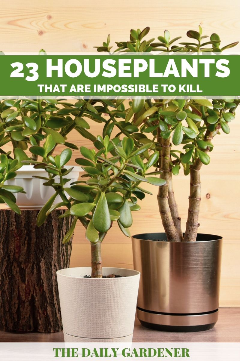 impossible to kill houseplants 1
