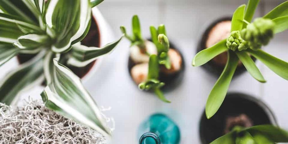 Top 23 Houseplants that are (Nearly) Impossible to Kill