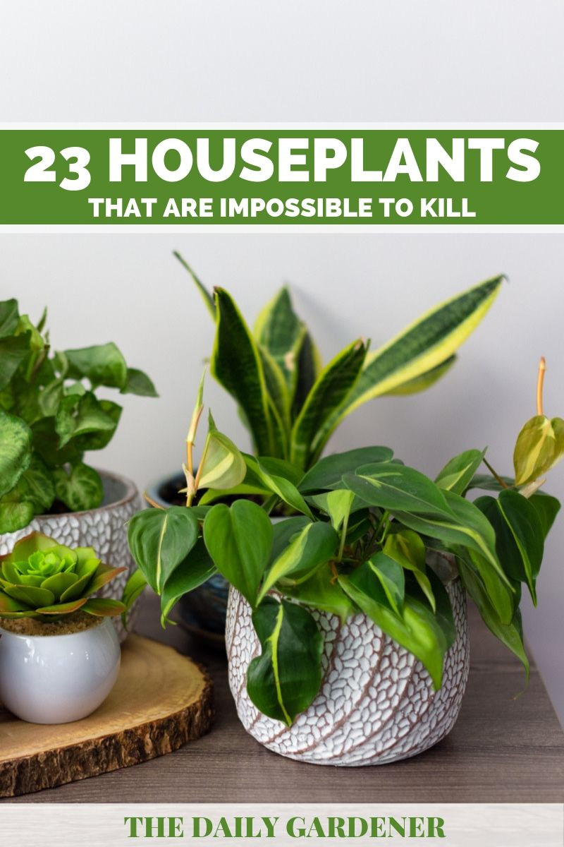 impossible to kill houseplants 2