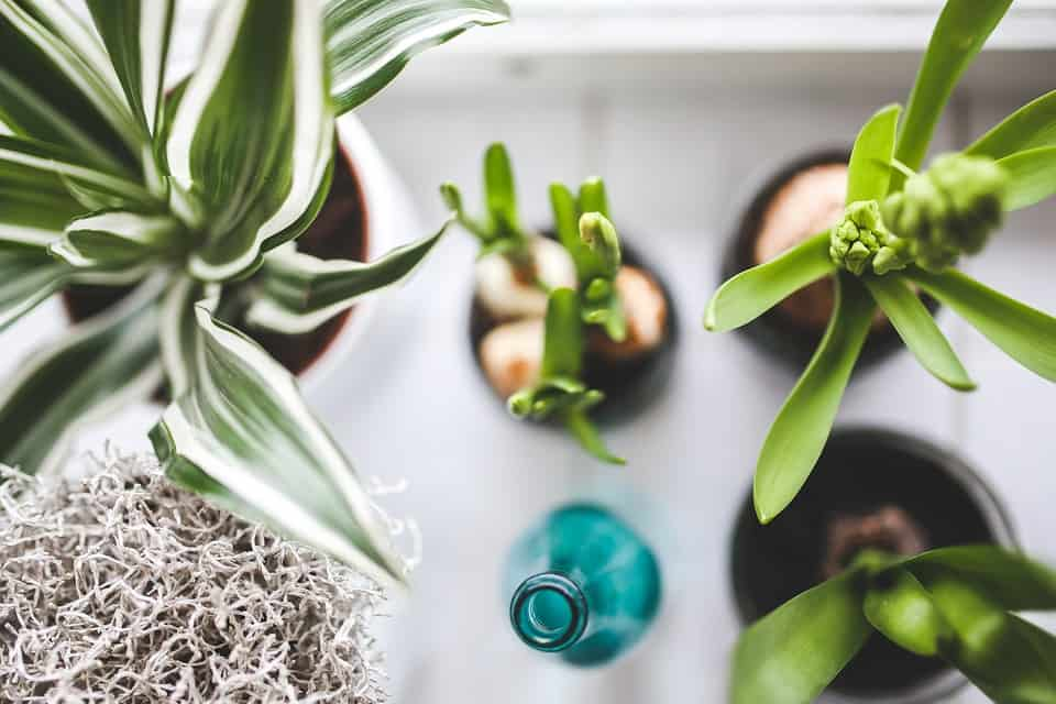 impossible to kill houseplants